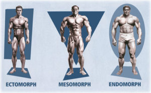 endomorfo-mesomorfo-ectomorfo